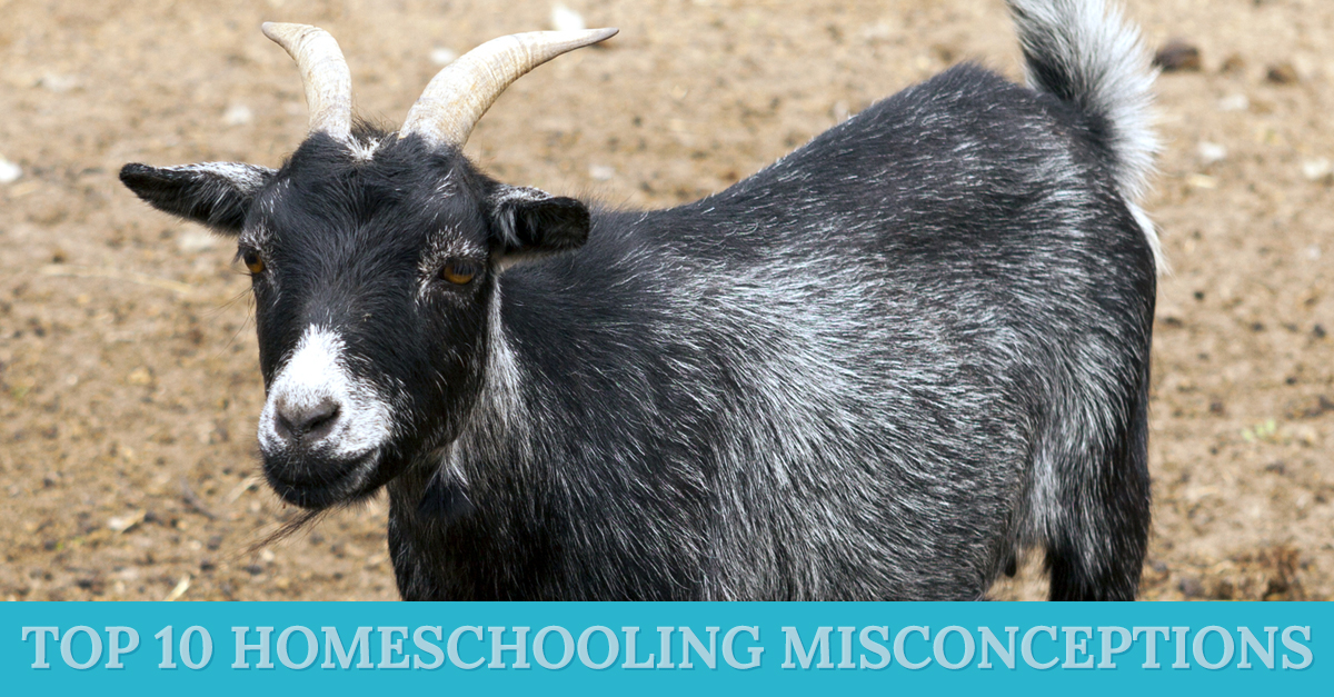 Top 10 Homeschooling Misconceptions